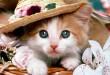 صور القطط في الحلم