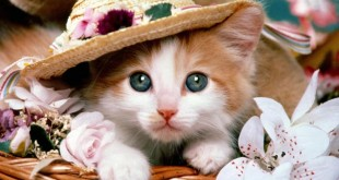 صورة القطط في الحلم