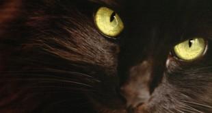 صورة حلم القطة السوداء