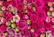 بالصور تفسير اكل الورد في الحلم تفسير الورد في المنام 110x75