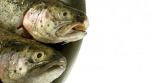 صورة تفسير رؤيا السمك