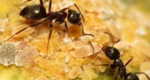 صورة معنى رؤية النمل في المنام