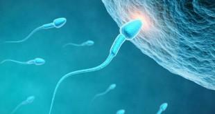 صورة ماهي الاشياء التي تساعد على الحمل بسرعة , الحمل وسرعه حدوثه