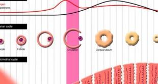 صورة الحساب الدقيق للحمل بالاسابيع , معجزة دورة حياة الجنين