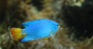 خصائص الاسماك , كيف تعيش الاسماك و انواعها