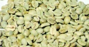صورة حبوب القهوة الخضراء للتخسيس , لان تصدقي مفعول القهوة الخضراء للتنحيف