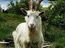 صورة اسم حيوان بحرف الميم , اسم حيوان يبداء بحرف ال م