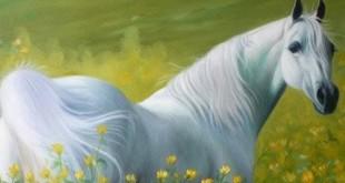 صورة تفسير الحصان الابيض في المنام