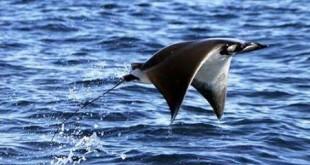 صورة سمك الطائر , نوع عجيب من الاسماك النادرة