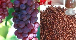 صورة بذور العنب الاحمر , تخيل بذور العنب ماذا تفعل لامراض الشيخوخة