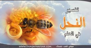 صورة رؤية النحل في المنام