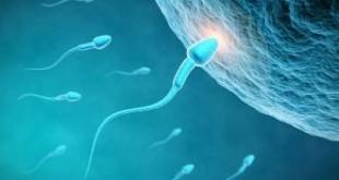 اعشاب تساعد على الحمل بولد , كيف تحملين بذكر في فترة حملك الاول