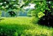 بالصور تفسير حلم رؤية الارض الخضراء ELSAHEFA 30708 21 110x75