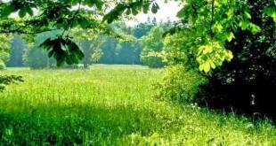 صورة تفسير حلم رؤية الارض الخضراء