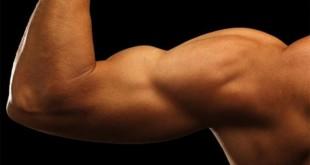 صورة تكبير عضلات اليد , كيف احصل على عضلات باي والتراي لليد بدون جيم