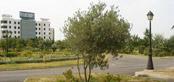 صورة عيد الشجرة في تونس , ماهو عيد الشجرة في دولة تونس