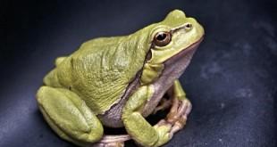 بالصور ما تفسير رؤية الضفدع في المنام frog 111179 640 465x349 310x165