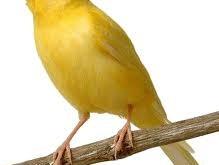 صورة تفسير الاحلام العصافير