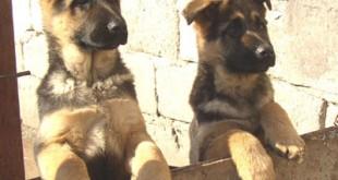 صفات الكلاب , وفاء الكلب اقوى من الانسان