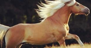 صورة تفسير الحصان البني في المنام , رؤية الفرس في الحلم