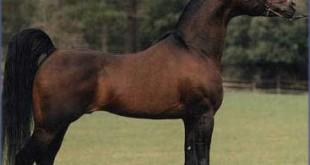 صورة رؤيا الحصان في المنام