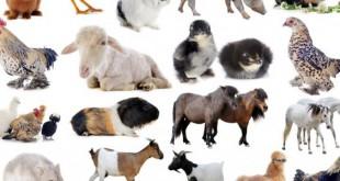 صورة بحث عن اصوات الحيوانات , اسم اصوات الحيوانات و تميزها عن مخلوقات الاخرى
