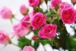 بالصور تفسير الورد في المنام تفسير الورد في الحلم 110x75