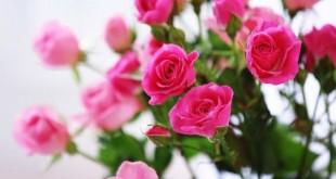 صور تفسير الورد في المنام