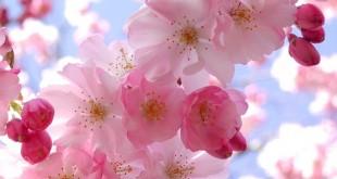صورة اجمل صور زهور في العالم , عشاق ملكات جمال الزهور الملفتة الجذابة