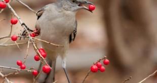 صورة عصافير زينة , كل ماتريد معرفته عن اطعام العصافير وعلاجها