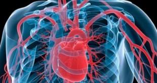 صورة كيفية عمل القلب في جسم الانسان , كيف يعمل القلب بشكل طبيعي