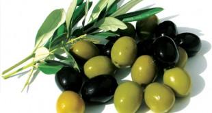 صورة هل الزيتون الاسود مضر للحامل , هل اكل الزيتون الاسود يضر حملي