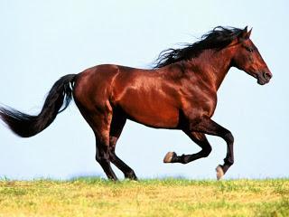 صور تفسير الحصان البني في المنام , رؤية الفرس في الحلم