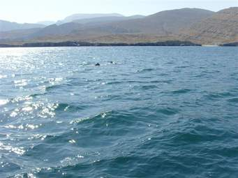 صورة رؤية السباحة في المنام