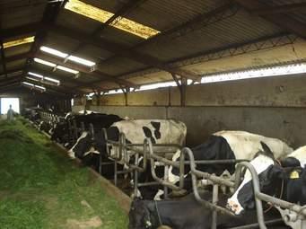 صورة مزرعة تربية الابقار , كيف تكون تربية الابقار