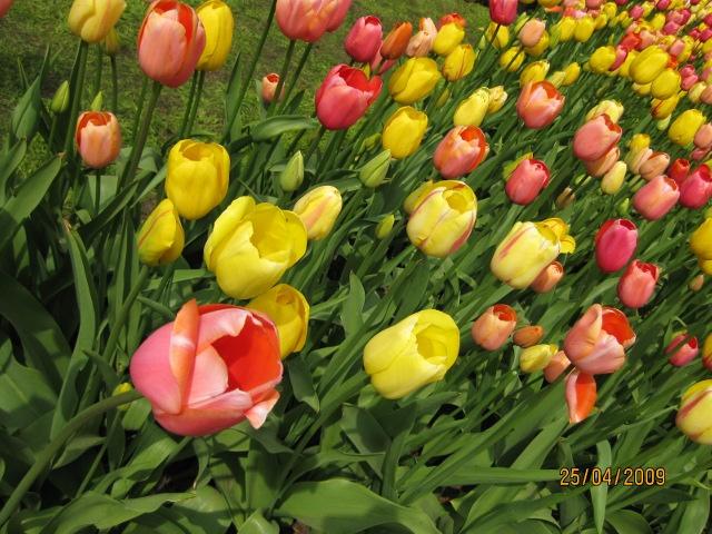 صورة صور لاجمل الازهار , ازهار الحب رومانسية لخطيبتك